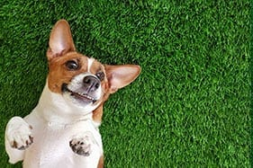Cleaning Smells From Artificial Grass for Pets