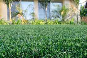 Which Artificial Grass is right for My Lawn