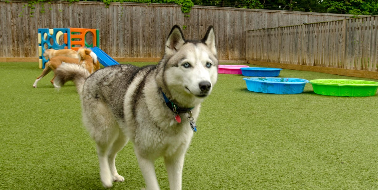Artificial Turf for pets Installation