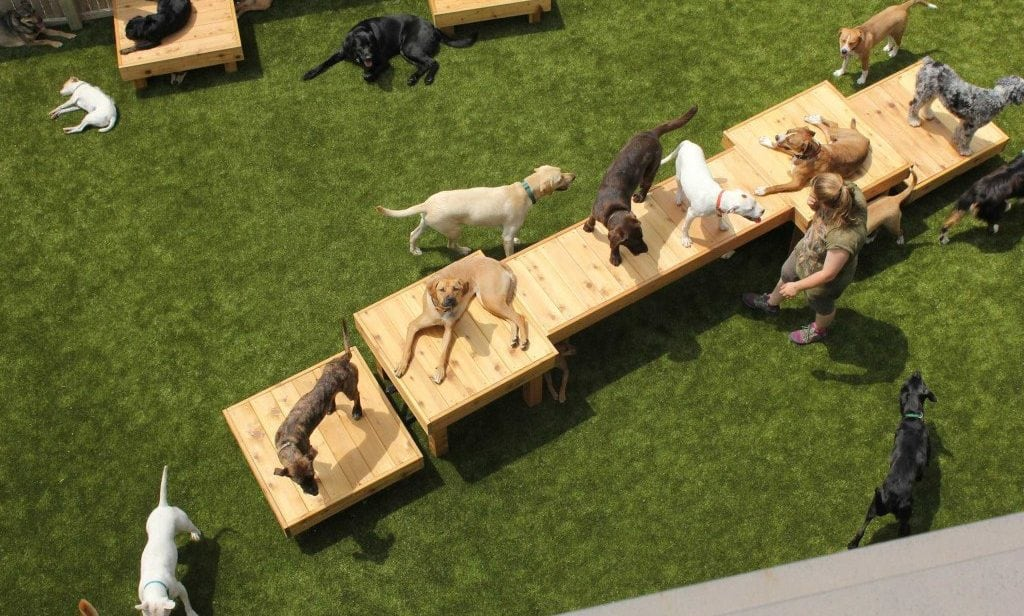 Aerial Dog Daycare K9Grass artificial turf