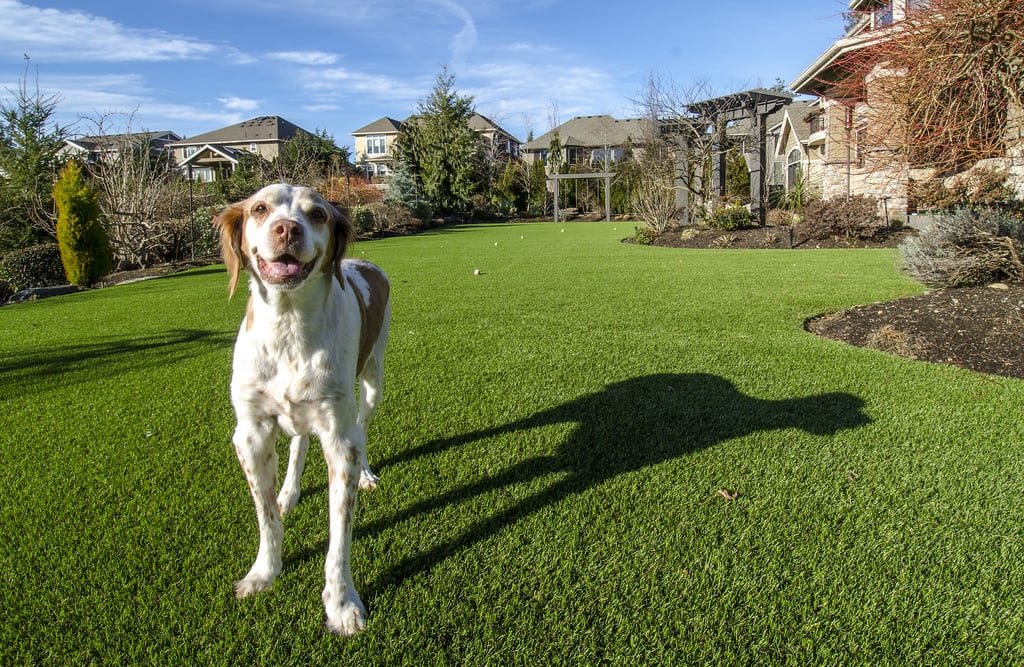 K9Grass artificial turf for dogs installation