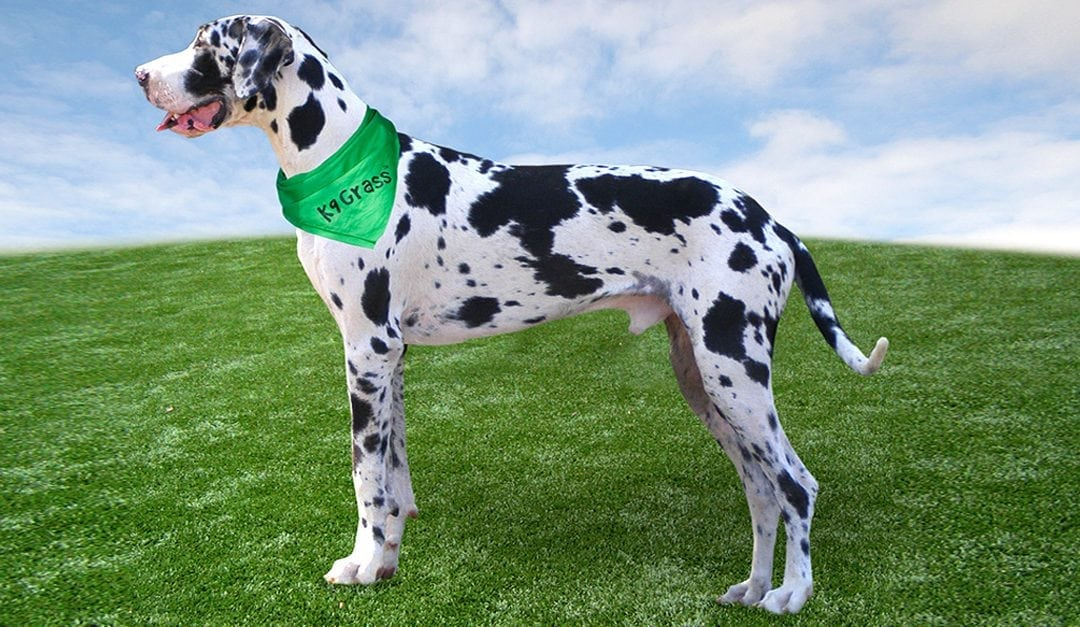 Why K9 Grass ROCKS for Pet Facilities