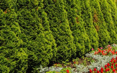 7 Plants That Create Privacy On Your Landscape